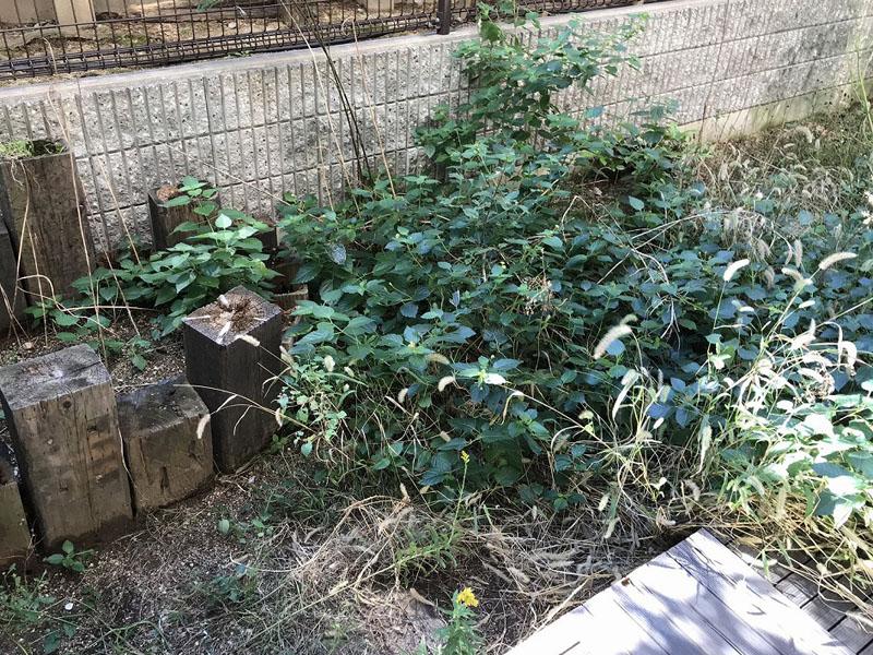 兵庫県西宮市S様邸  お庭に人工芝施工しました