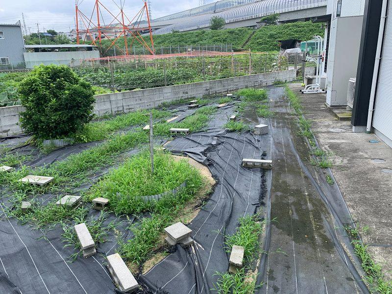 大阪府交野市O様邸 お庭の人工芝施工